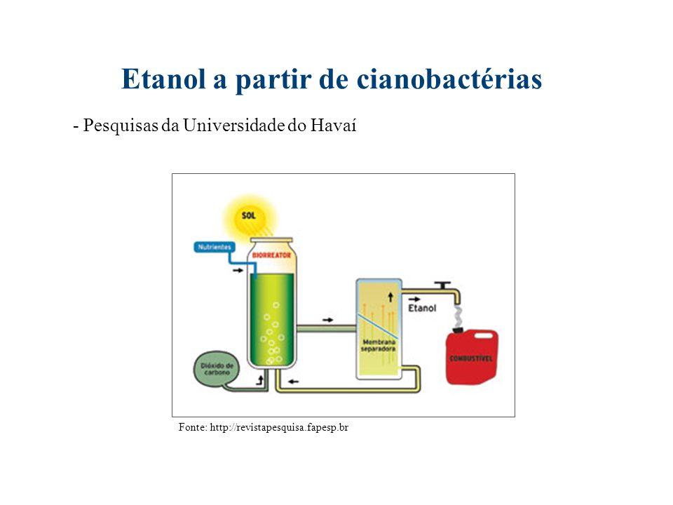 Etanol a partir de cianobactérias Fonte: http://revistapesquisa.fapesp.br - Pesquisas da Universidade do Havaí