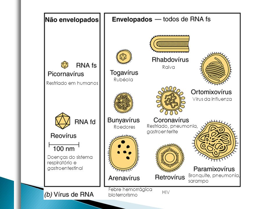 Resfriado em humanos Doenças do sistema respiratório e gastroentestinal Rubéola Raiva Vírus da influenza Resfriado, pneumonia, gastroenterite Roedores
