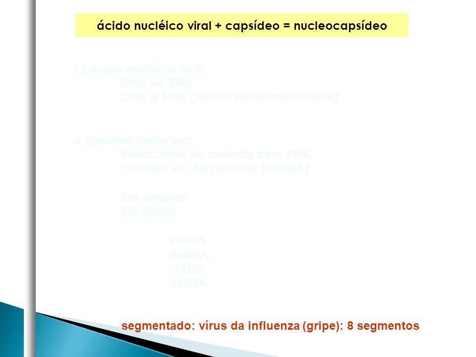 ácido nucléico viral + capsídeo = nucleocapsídeo c) ácido nucléico viral DNA ou RNA DNA e RNA (nunca simultaneamente) o genoma pode ser: linear: vírus