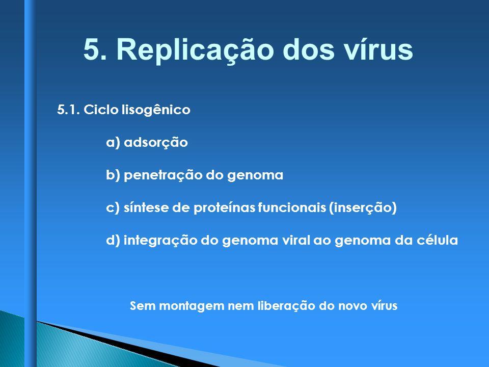 5.1. Ciclo lisogênico a) adsorção b) penetração do genoma c) síntese de proteínas funcionais (inserção) d) integração do genoma viral ao genoma da cél
