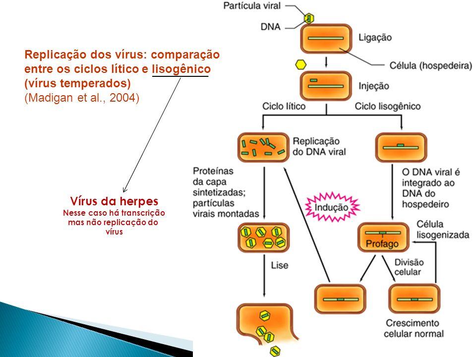 Replicação dos vírus: comparação entre os ciclos lítico e lisogênico (vírus temperados) (Madigan et al., 2004) Vírus da herpes Nesse caso há transcriç