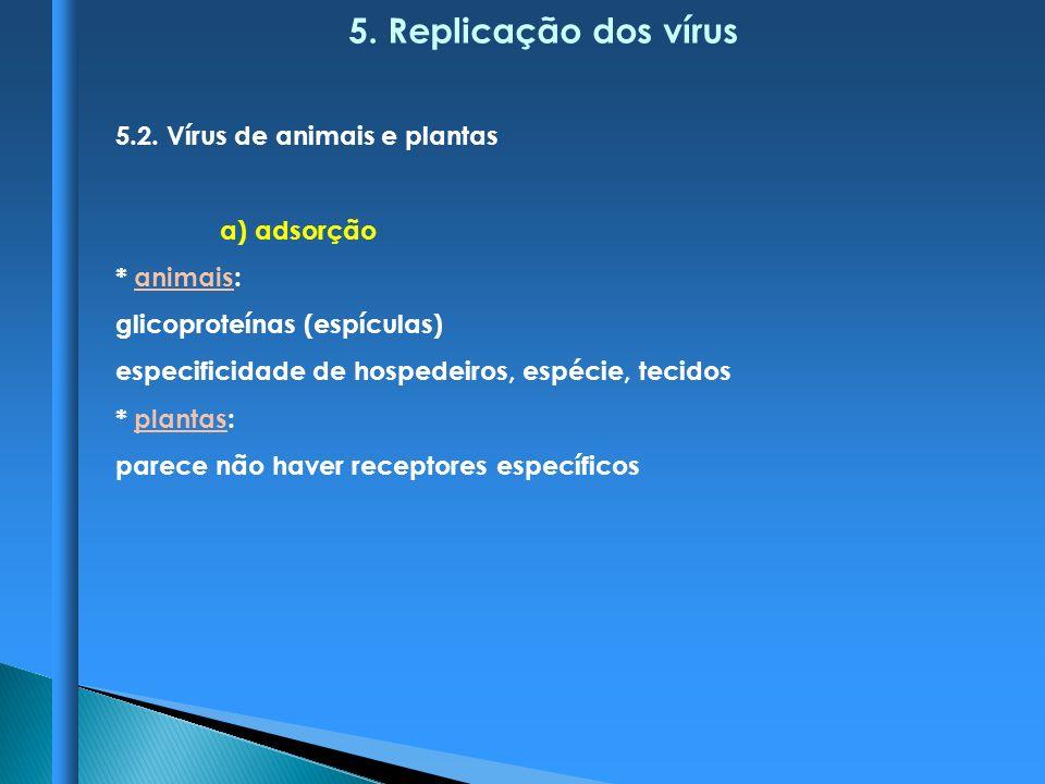 5. Replicação dos vírus 5.2. Vírus de animais e plantas a) adsorção * animais: glicoproteínas (espículas) especificidade de hospedeiros, espécie, teci