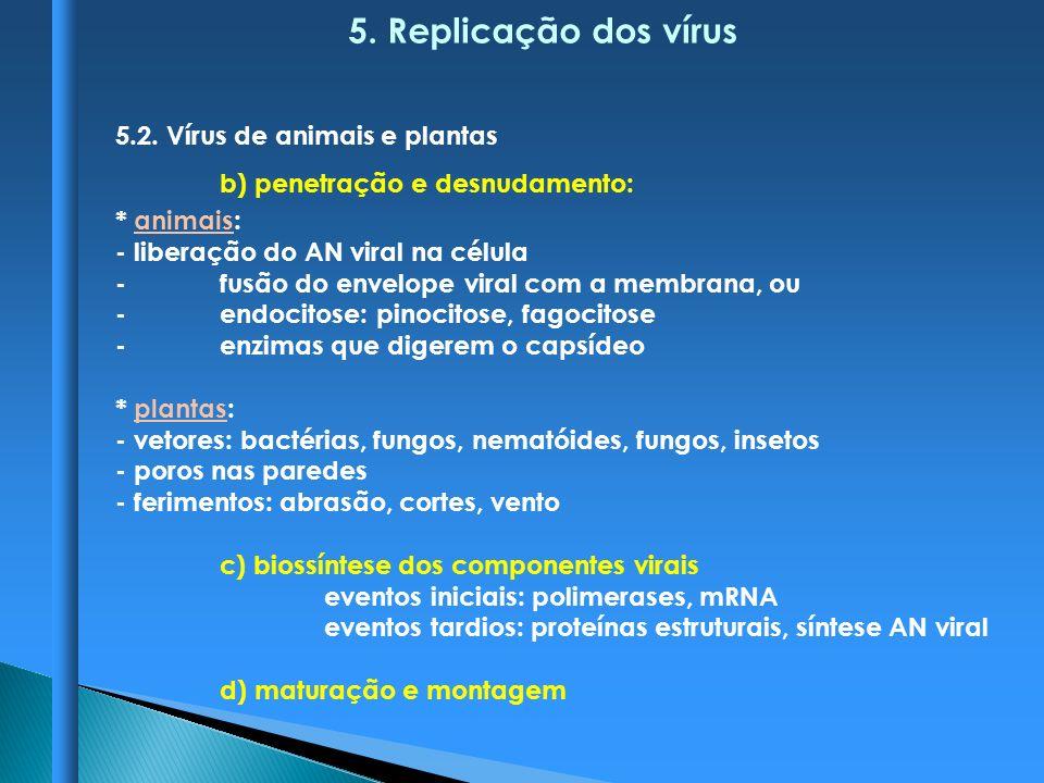 5. Replicação dos vírus 5.2. Vírus de animais e plantas b) penetração e desnudamento: * animais: - liberação do AN viral na célula -fusão do envelope