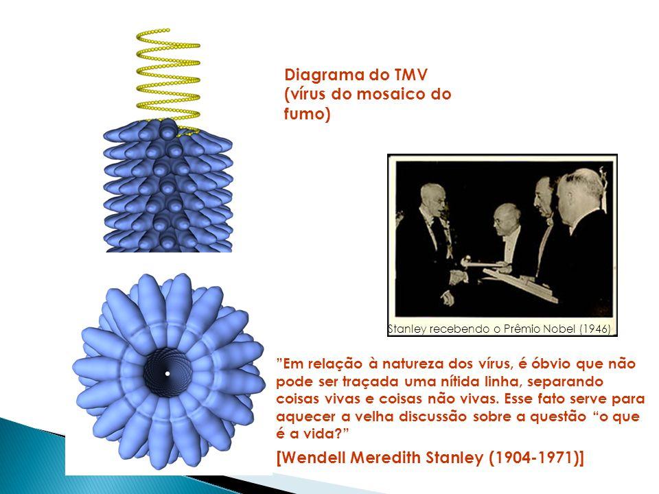 Vírus de simetria icosaédrica