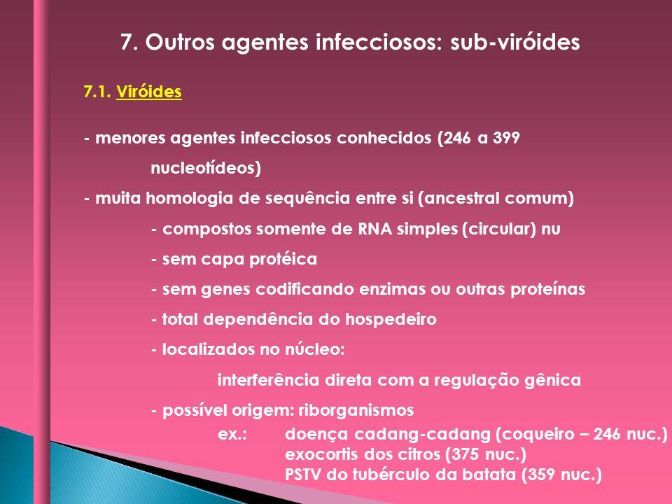 7.1. Viróides - menores agentes infecciosos conhecidos (246 a 399 nucleotídeos) - muita homologia de sequência entre si (ancestral comum) - compostos