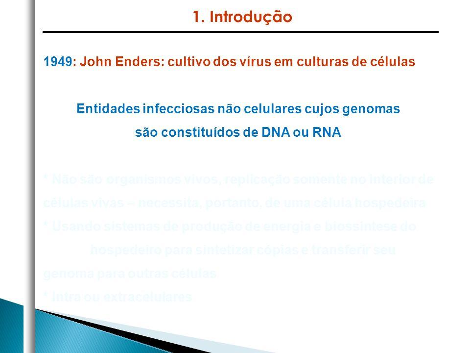 1949: John Enders: cultivo dos vírus em culturas de células Entidades infecciosas não celulares cujos genomas são constituídos de DNA ou RNA * Não são organismos vivos, replicação somente no interior de células vivas – necessita, portanto, de uma célula hospedeira * Usando sistemas de produção de energia e biossíntese do hospedeiro para sintetizar cópias e transferir seu genoma para outras células * Intra ou extracelulares 1.