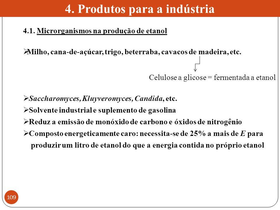 4.1. Microrganismos na produção de etanol Milho, cana-de-açúcar, trigo, beterraba, cavacos de madeira, etc. Saccharomyces, Kluyveromyces, Candida, etc