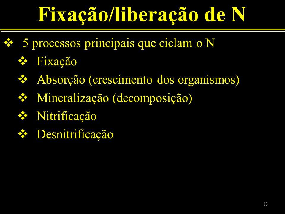 Fixação/liberação de N 5 processos principais que ciclam o N Fixação Absorção (crescimento dos organismos) Mineralização (decomposição) Nitrificação D