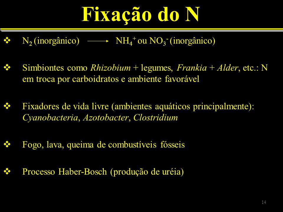 Fixação do N N 2 (inorgânico) NH 4 + ou NO 3 - (inorgânico) Simbiontes como Rhizobium + legumes, Frankia + Alder, etc.: N em troca por carboidratos e