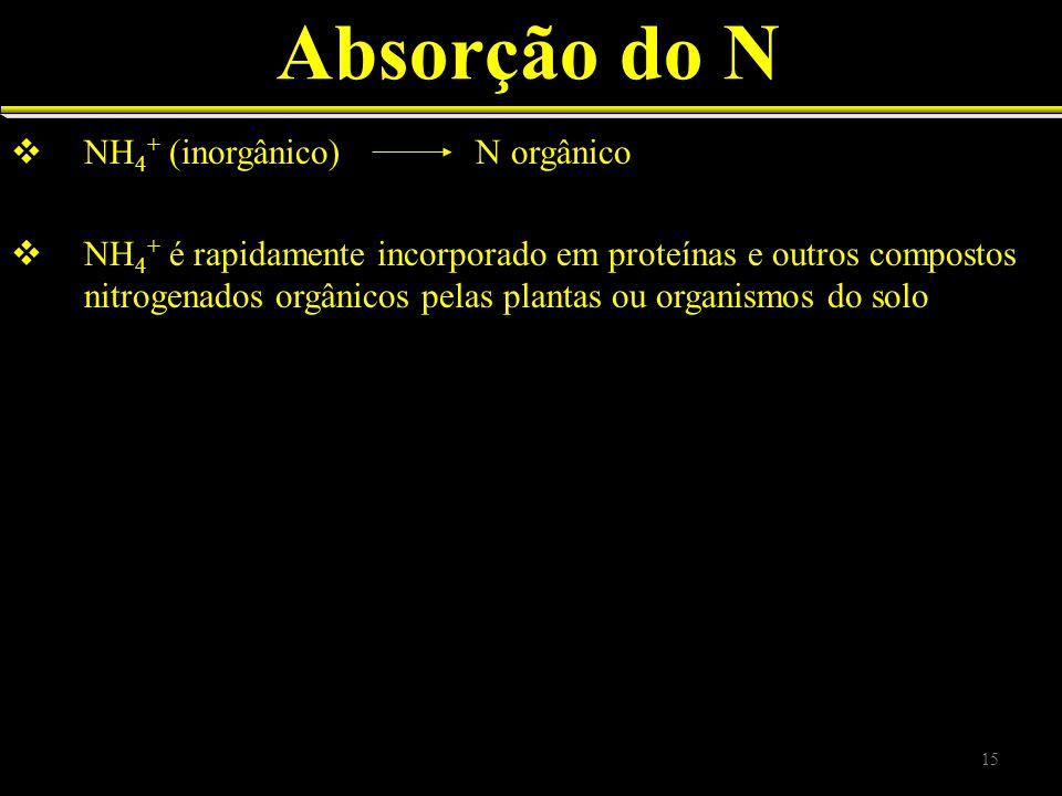 Absorção do N NH 4 + (inorgânico) N orgânico NH 4 + é rapidamente incorporado em proteínas e outros compostos nitrogenados orgânicos pelas plantas ou