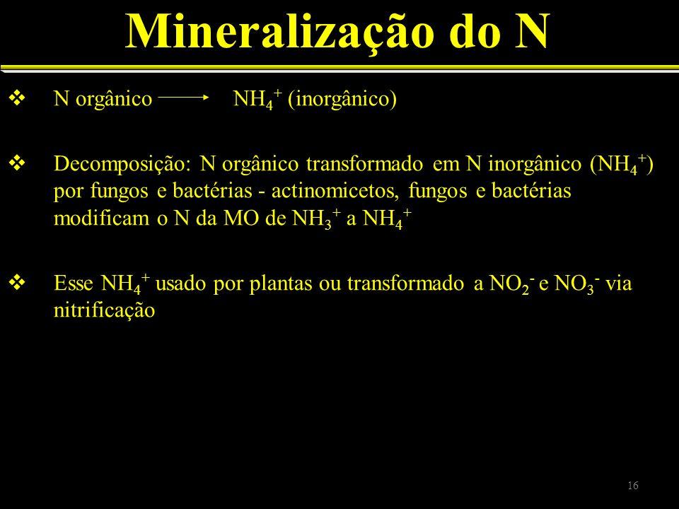 Mineralização do N N orgânico NH 4 + (inorgânico) Decomposição: N orgânico transformado em N inorgânico (NH 4 + ) por fungos e bactérias - actinomicet