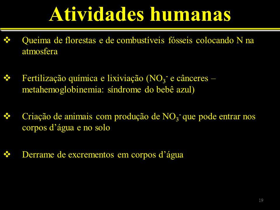 Atividades humanas Queima de florestas e de combustíveis fósseis colocando N na atmosfera Fertilização química e lixiviação (NO 3 - e cânceres – metah