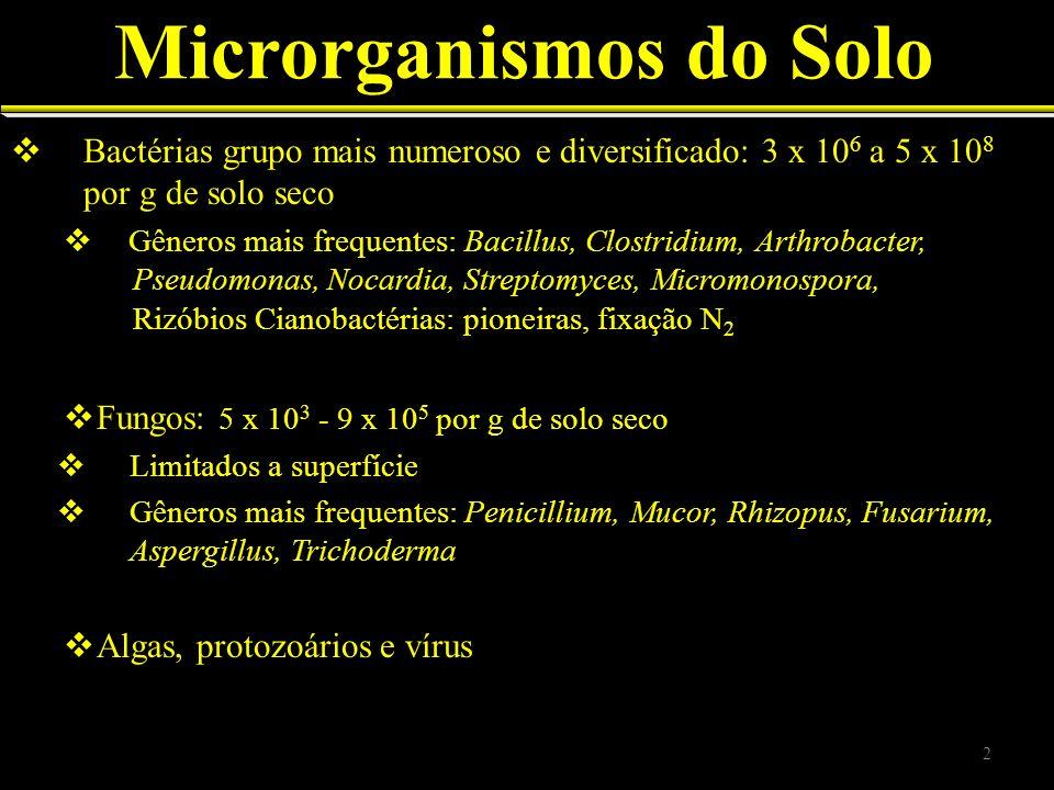 Bactérias grupo mais numeroso e diversificado: 3 x 10 6 a 5 x 10 8 por g de solo seco Gêneros mais frequentes: Bacillus, Clostridium, Arthrobacter, Ps