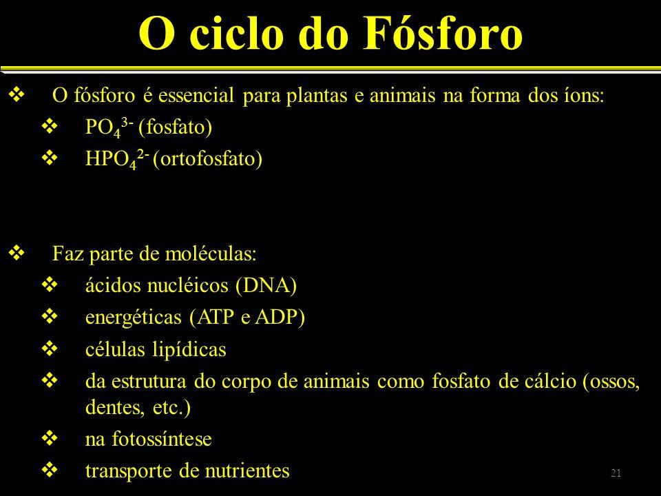 O ciclo do Fósforo O fósforo é essencial para plantas e animais na forma dos íons: PO 4 3- (fosfato) HPO 4 2- (ortofosfato) Faz parte de moléculas: ác