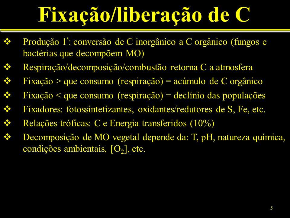 Produção 1 ª : conversão de C inorgânico a C orgânico (fungos e bactérias que decompõem MO) Respiração/decomposição/combustão retorna C a atmosfera Fi