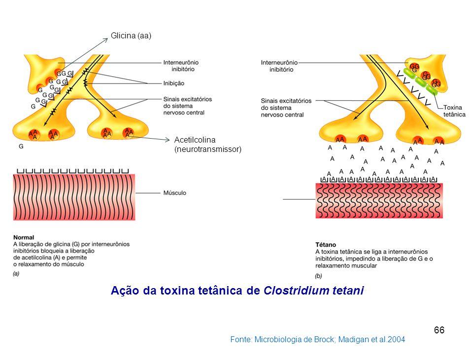Ação da toxina tetânica de Clostridium tetani Fonte: Microbiologia de Brock; Madigan et al.2004 66 Glicina (aa) Acetilcolina (neurotransmissor)
