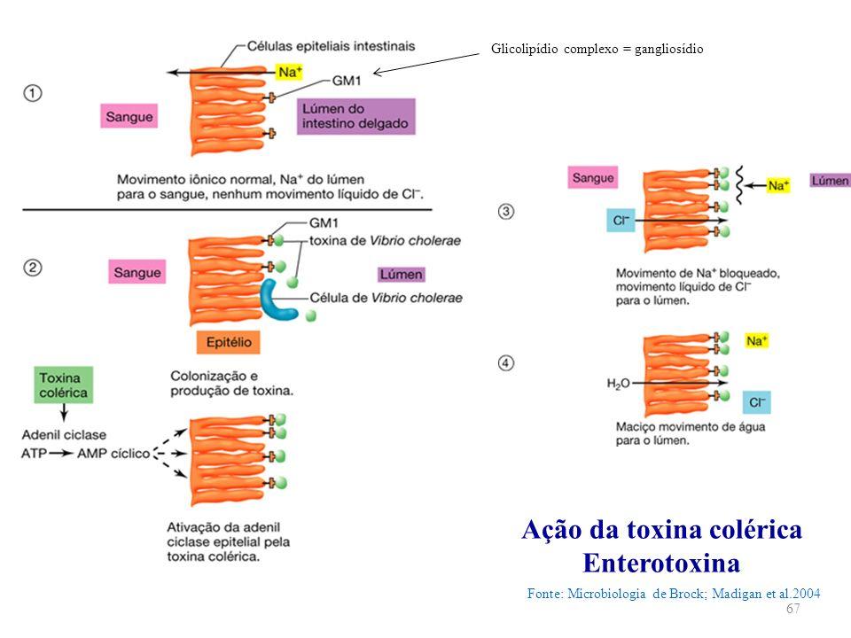 Ação da toxina colérica Enterotoxina Fonte: Microbiologia de Brock; Madigan et al.2004 67 Glicolipídio complexo = gangliosídio