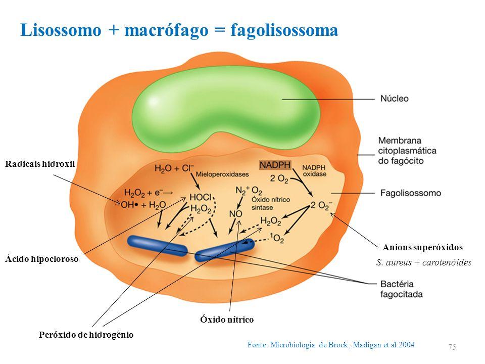 Fonte: Microbiologia de Brock; Madigan et al.2004 75 Peróxido de hidrogênio Anions superóxidos Radicais hidroxil Ácido hipocloroso Óxido nítrico Lisos