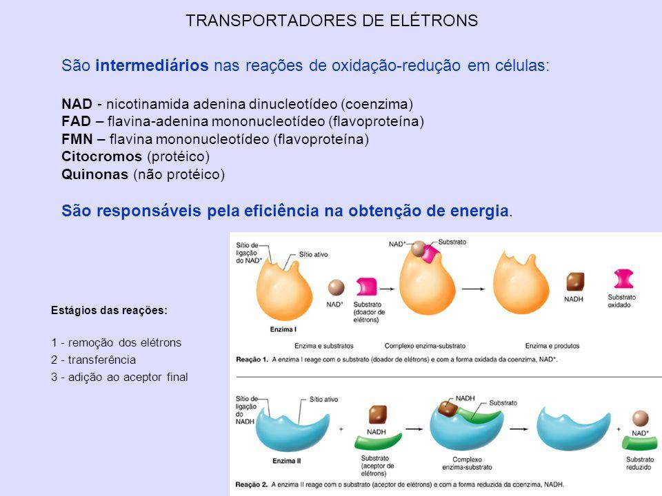 TRANSPORTADORES DE ELÉTRONS São intermediários nas reações de oxidação-redução em células: NAD - nicotinamida adenina dinucleotídeo (coenzima) FAD – f