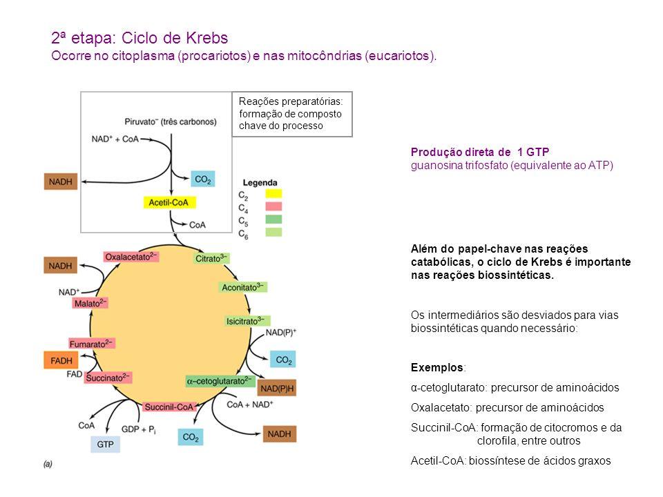 Produção direta de 1 GTP guanosina trifosfato (equivalente ao ATP) Além do papel-chave nas reações catabólicas, o ciclo de Krebs é importante nas reaç