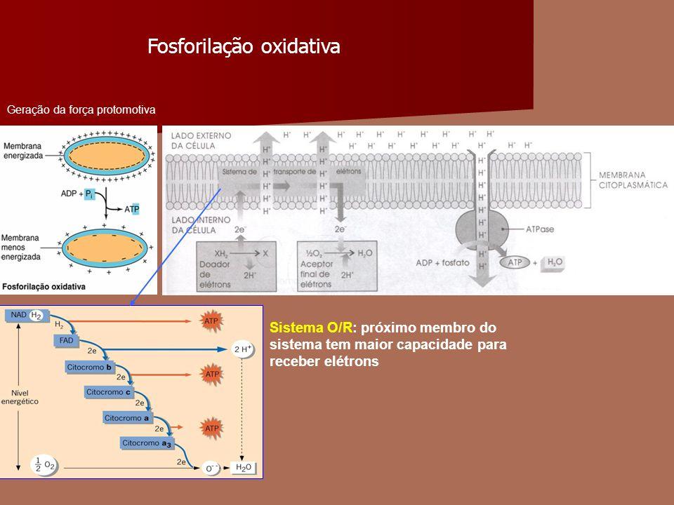 Fosforilação oxidativa Sistema O/R: próximo membro do sistema tem maior capacidade para receber elétrons Geração da força protomotiva