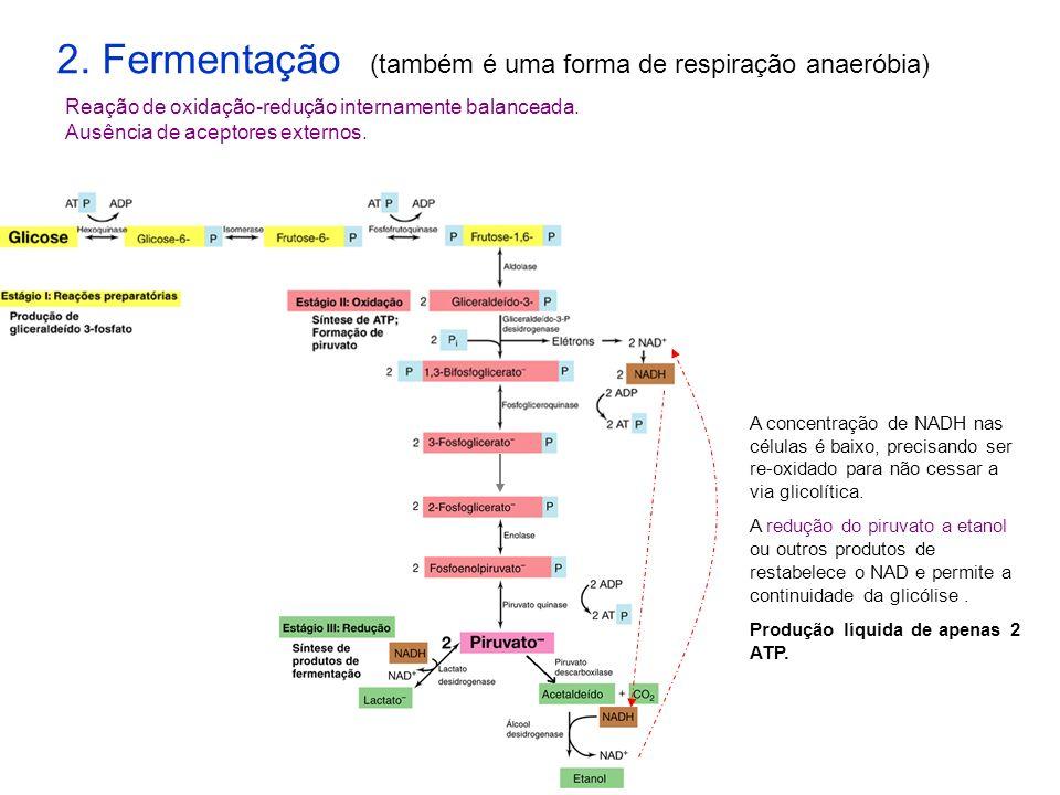2. Fermentação (também é uma forma de respiração anaeróbia) Reação de oxidação-redução internamente balanceada. Ausência de aceptores externos. A conc