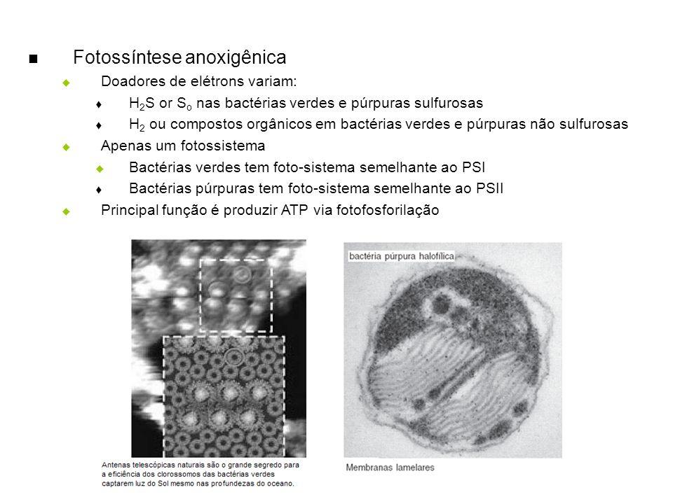 Fotossíntese anoxigênica Doadores de elétrons variam: H 2 S or S o nas bactérias verdes e púrpuras sulfurosas H 2 ou compostos orgânicos em bactérias