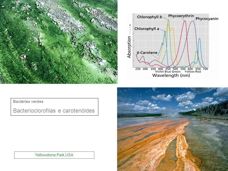 Bactérias verdes Bacterioclorofilas e carotenóides Yellowstone Park,USA