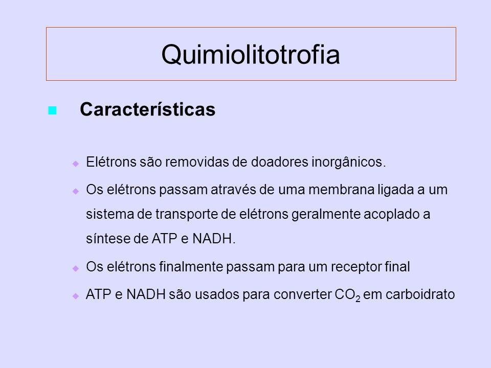 Quimiolitotrofia Características Elétrons são removidas de doadores inorgânicos. Os elétrons passam através de uma membrana ligada a um sistema de tra