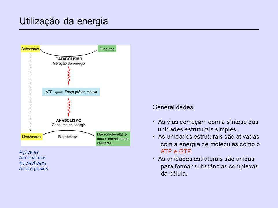 Utilização da energia Açúcares Aminoácidos Nucleotídeos Ácidos graxos Generalidades: As vias começam com a síntese das unidades estruturais simples. A