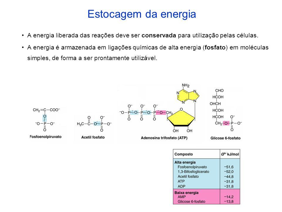 A energia liberada das reações deve ser conservada para utilização pelas células. A energia é armazenada em ligações químicas de alta energia (fosfato