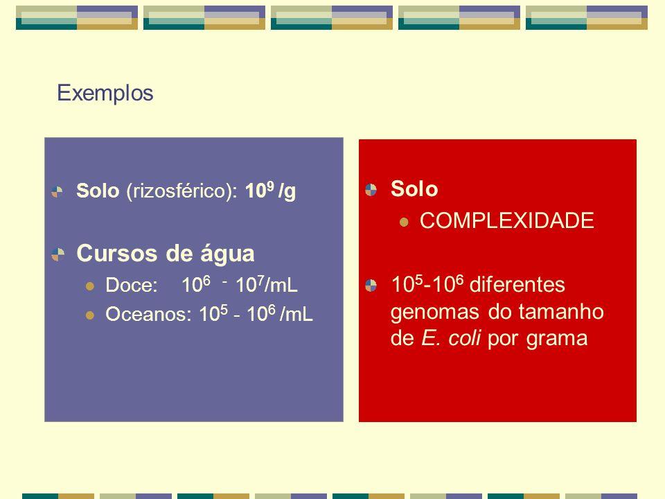 Exemplos Solo (rizosférico): 10 9 /g Cursos de água Doce: 10 6 - 10 7 /mL Oceanos: 10 5 - 10 6 /mL Solo COMPLEXIDADE 10 5 -10 6 diferentes genomas do