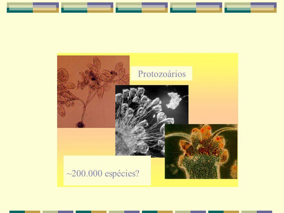 Protozoários ~200.000 espécies?
