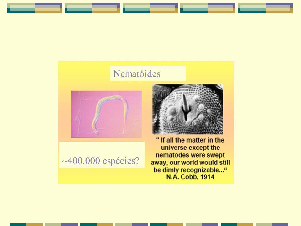 Nematóides ~400.000 espécies?