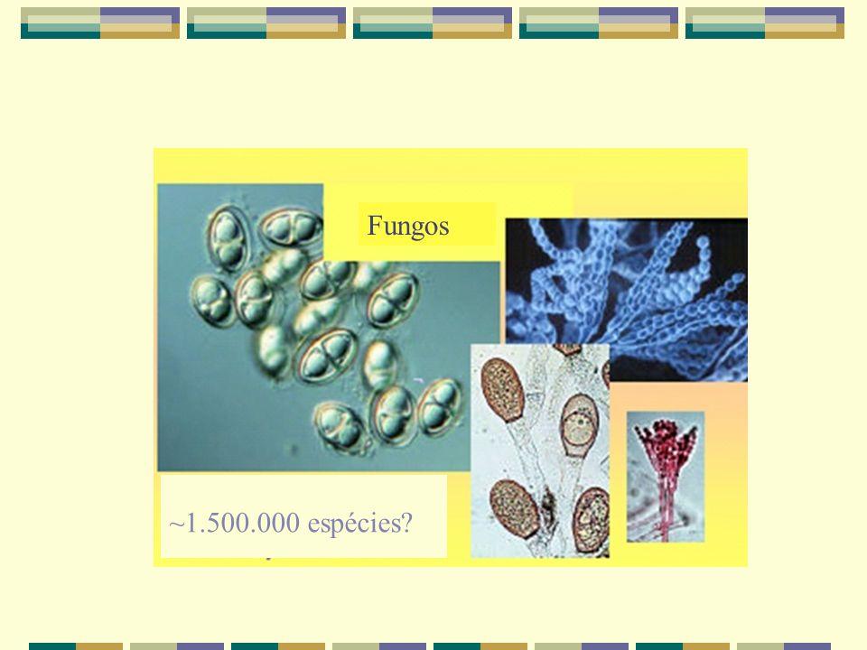 Fungos ~1.500.000 espécies?