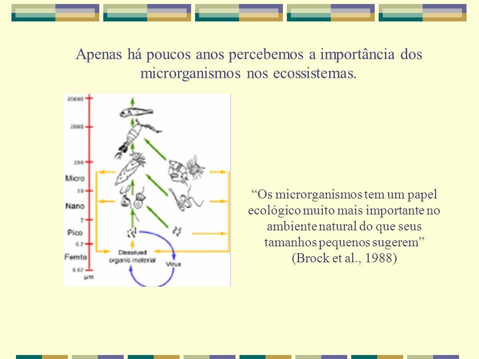Apenas há poucos anos percebemos a importância dos microrganismos nos ecossistemas. Os microrganismos tem um papel ecológico muito mais importante no