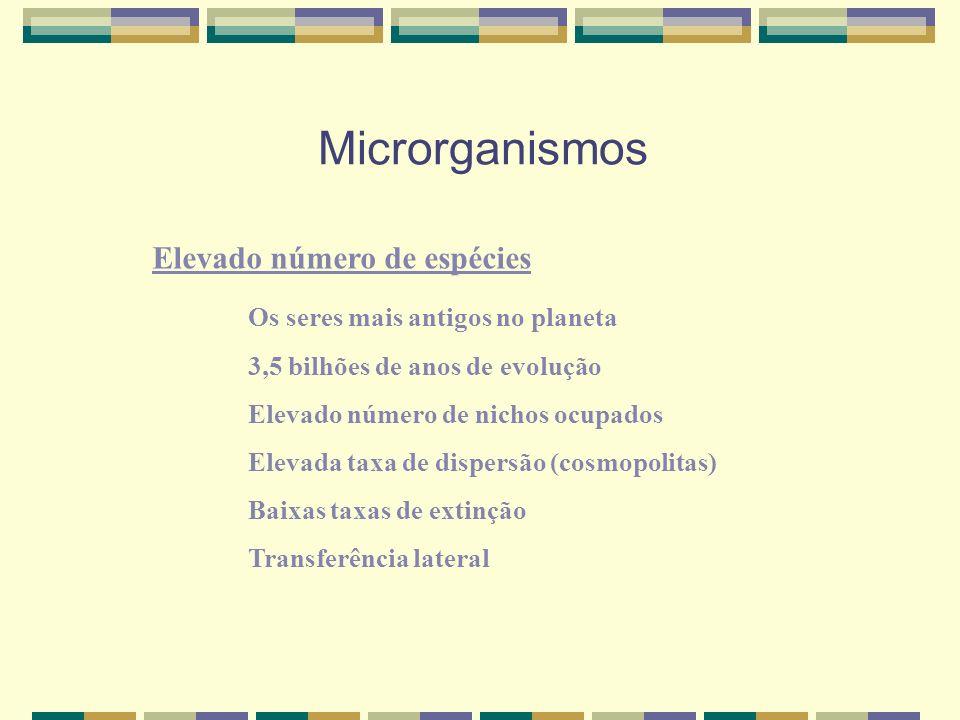 Microrganismos Elevado número de espécies Os seres mais antigos no planeta 3,5 bilhões de anos de evolução Elevado número de nichos ocupados Elevada t