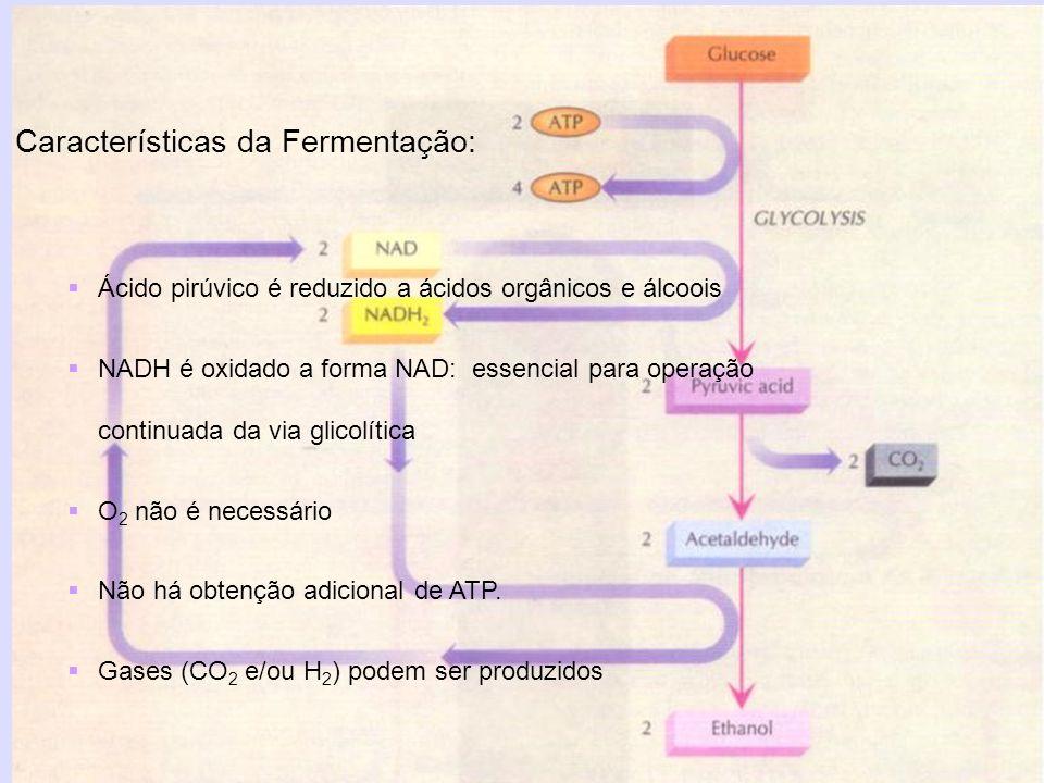 Características da Fermentação: Ácido pirúvico é reduzido a ácidos orgânicos e álcoois NADH é oxidado a forma NAD: essencial para operação continuada
