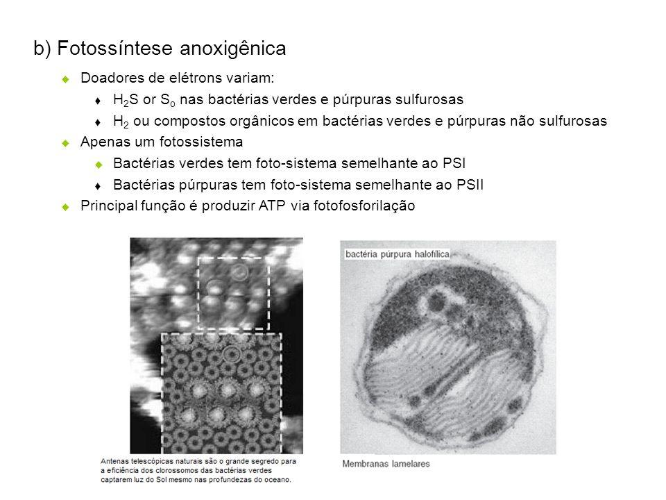 b) Fotossíntese anoxigênica Doadores de elétrons variam: H 2 S or S o nas bactérias verdes e púrpuras sulfurosas H 2 ou compostos orgânicos em bactéri