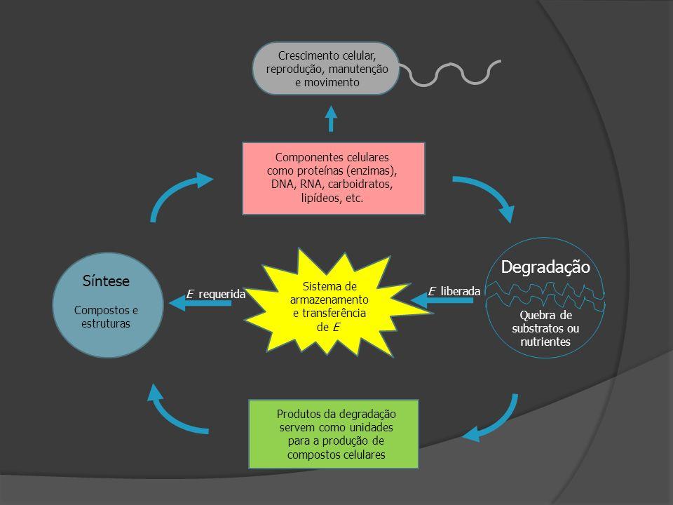 Compostos ricos em energia: armazenamento e transferência de energia (a longo prazo) Procariotos: Glicogenio Poli-β-hidroxibutirato Poli-idroxialcanoatos S (elementar) Eucariotos Poliglicose na forma de amido Lipídeos na forma de gorduras