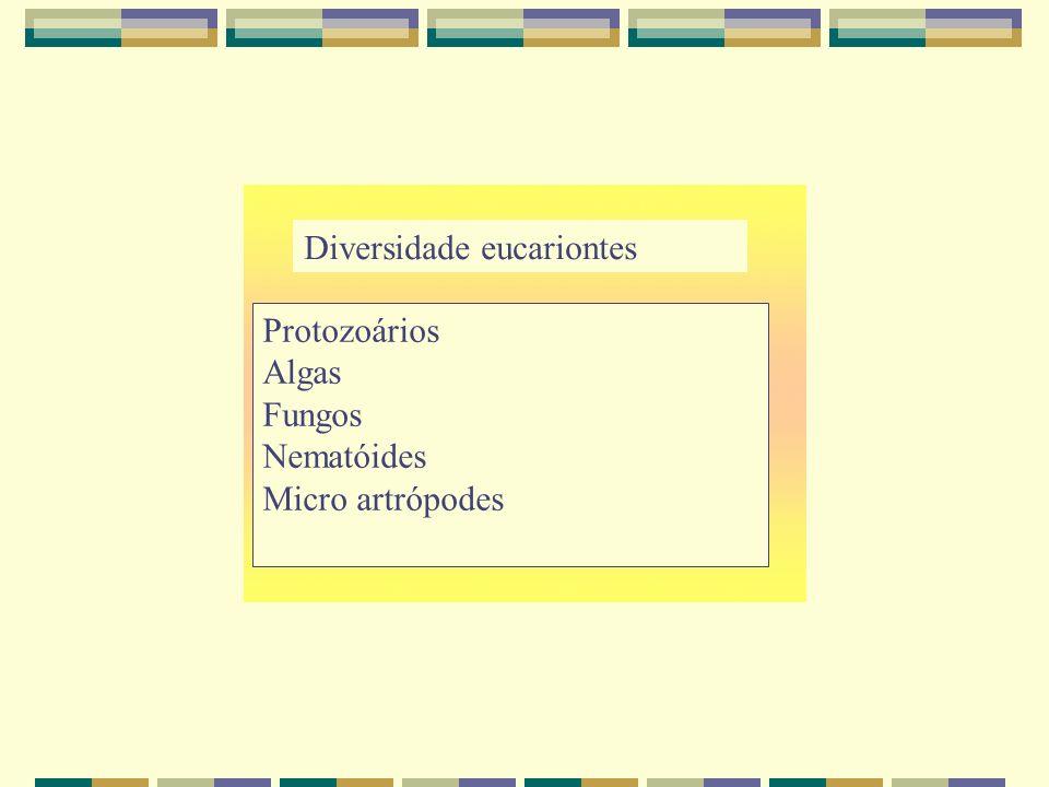 Diversidade eucariontes Protozoários Algas Fungos Nematóides Micro artrópodes