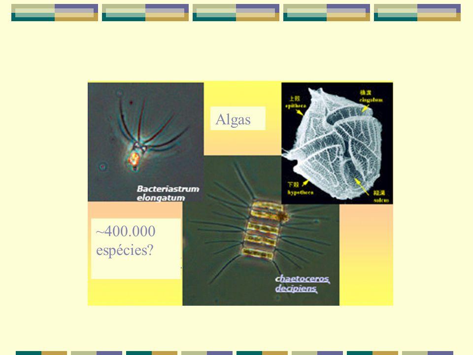 ~400.000 espécies? Algas