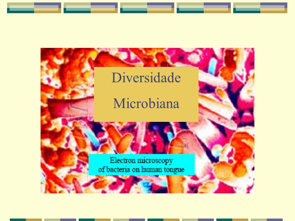 Diversidade microbiana menos estudada Maior parte dos trabalhos provem de estudos com insetos, plantas e aves (seres terrestres)