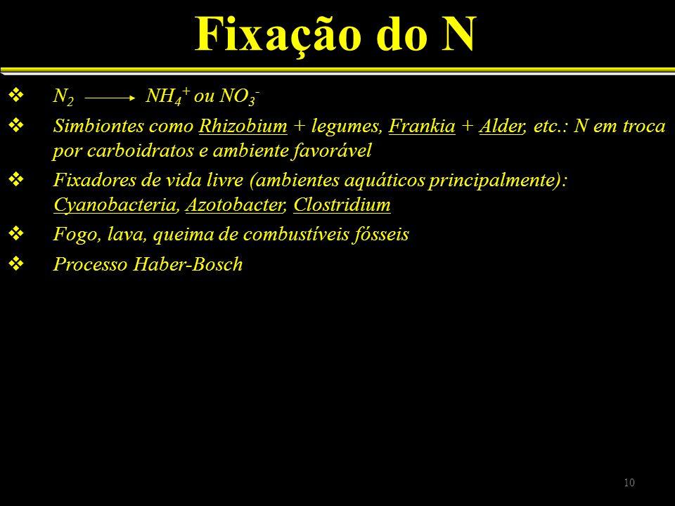 Fixação do N N 2 NH 4 + ou NO 3 - Simbiontes como Rhizobium + legumes, Frankia + Alder, etc.: N em troca por carboidratos e ambiente favorável Fixador