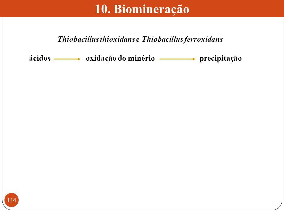 Thiobacillus thioxidans e Thiobacillus ferroxidans ácidosoxidação do minérioprecipitação 10. Biomineração 114
