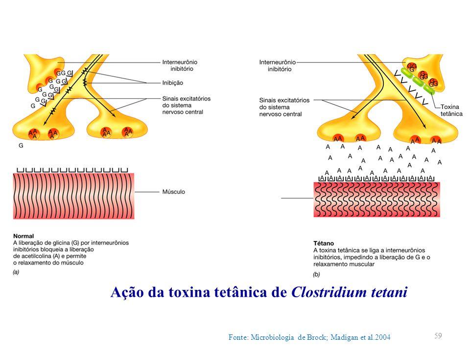 Ação da toxina tetânica de Clostridium tetani Fonte: Microbiologia de Brock; Madigan et al.2004 59