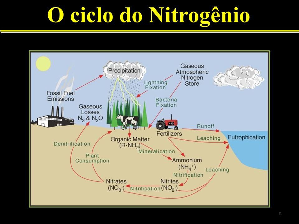 Fixação/liberação de N 5 processos principais ciclam N Fixação Absorção (crescimento dos organismos) Mineralização (decomposição) Nitrificação Denitrificação 9