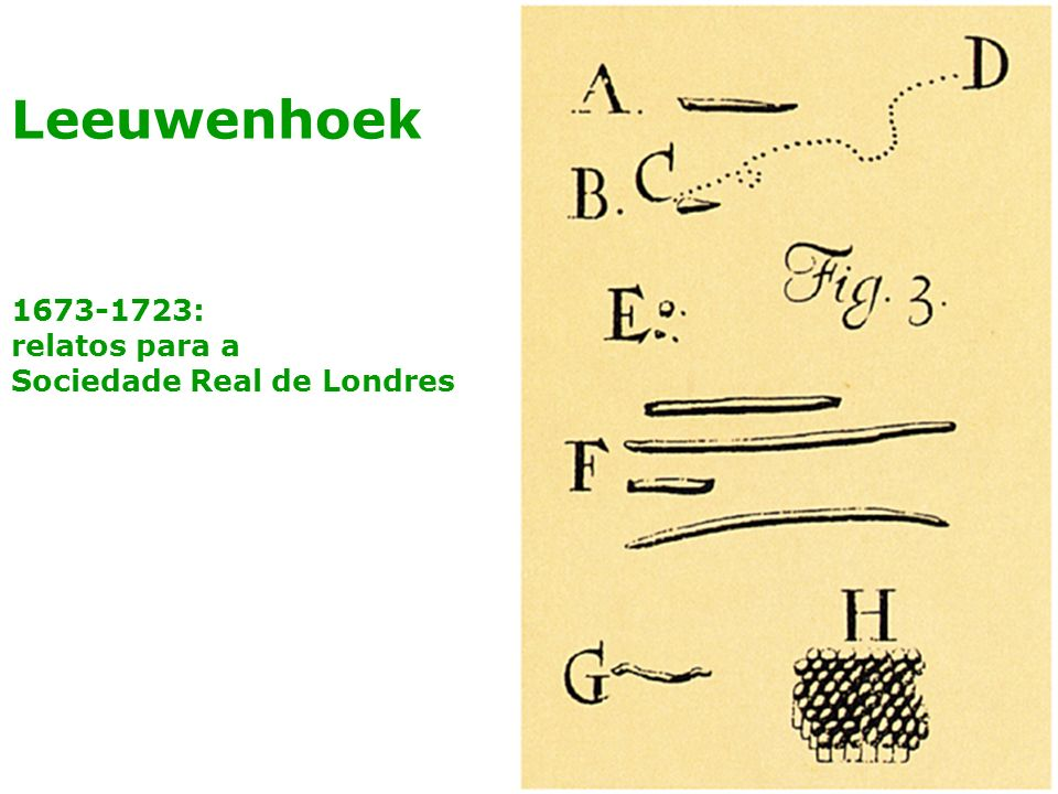 1673-1723: relatos para a Sociedade Real de Londres Leeuwenhoek