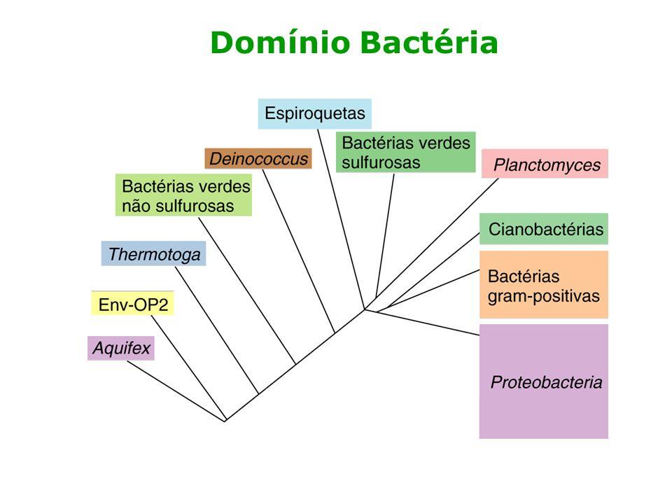 Domínio Archaea