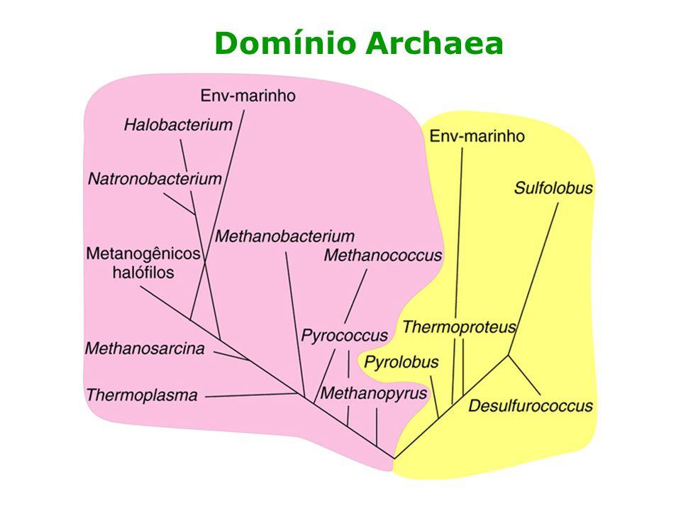 Archaea Fossil range: Paleoarchean - RecentPaleoarchean HalobacteriaHalobacteria sp.